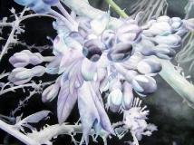 Kirschblüte, Cherry Blossom, Oil on Canvas * 140 x 185 cm   55 x 73 inch